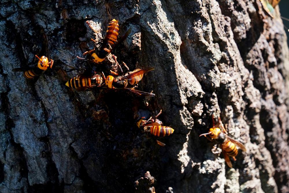 ハチやシロアリなどの害虫対策や害虫駆除について解説
